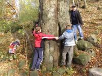 kolik měří strom