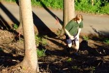 lesní kros - Pavel